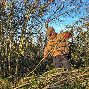 Hedgelaying at Skyegrove